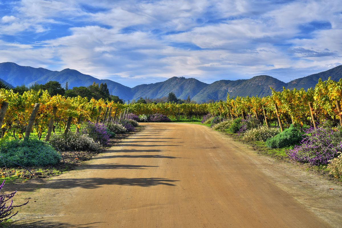 Chilean Wines Have Risen In Stature Without Losing Their Budget-friendly Appeal photo