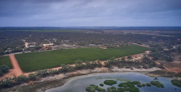 Banrock Station Commits To Planting 100k Trees A Year photo