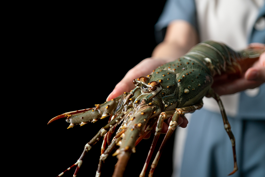 The Lobster Claws photo