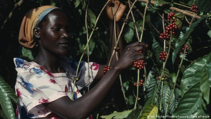 How Climate Change Threatens African Coffee Farmers photo