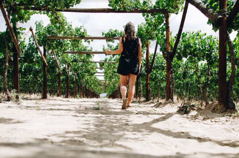 De Krans Wines: Your Summer Destination For Fruit Picking, Wine Tasting And Leisurely Deli Lunches photo