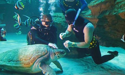 Two Oceans Aquarium Celebrates 25 Years Since It Opened Its Doors photo