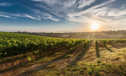 Boosting Wine Tourism: Netflix Film To Star Cape Winelands As Travel Destination photo