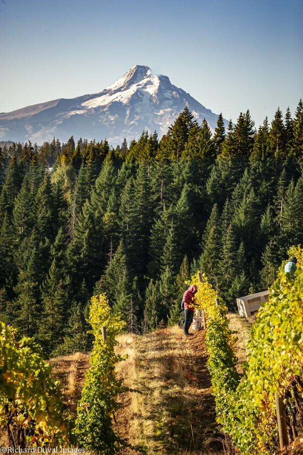 Vinelines Dispatch: A Gorgeous Look At Harvest photo