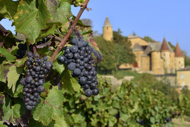 'nouvelle Generation' To Drive Beaujolais Export Potential photo