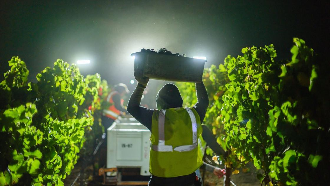 Good News Stories Of 2020 From Napa County Winemakers And Grapegrowers photo