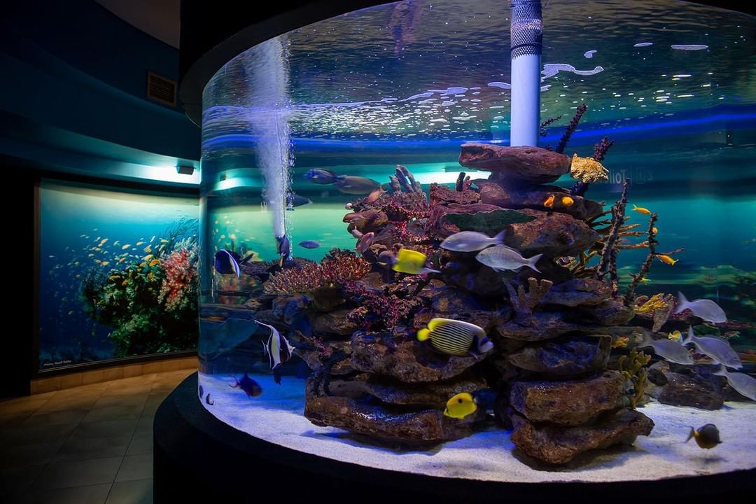 Holiday Fun And Prizes At Two Oceans Aquarium photo
