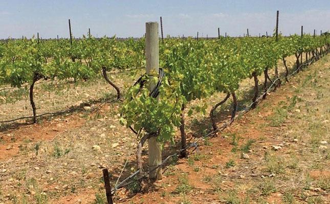 Free State's First Black, Female Raisin Farmer (and She Makes Wine) photo