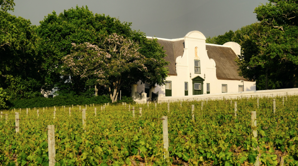 Groot Constantia Sauvignon Blanc Named Best In World photo