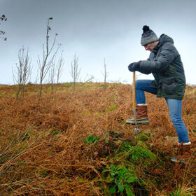Johnnie Walker To Plant One Million Trees photo