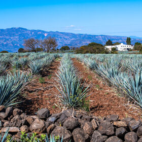 Tequila And Mezcal Brands To Watch In 2021 photo