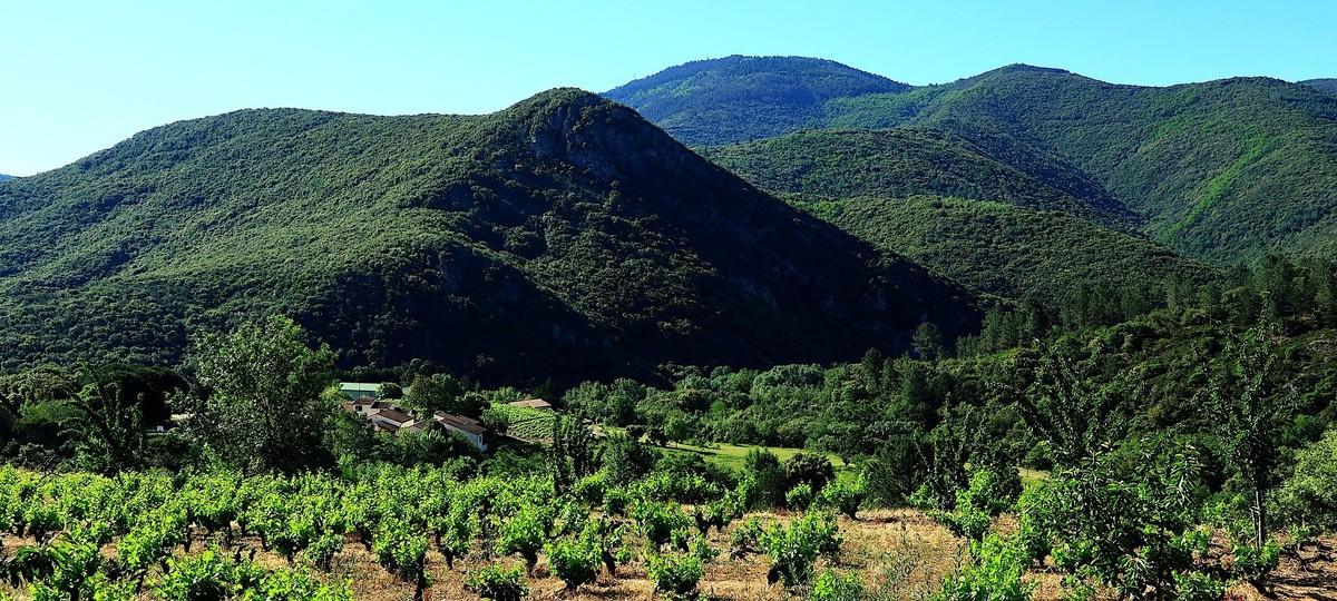 Winery To Watch: Blackbird Vineyards, By Robert Whitley photo