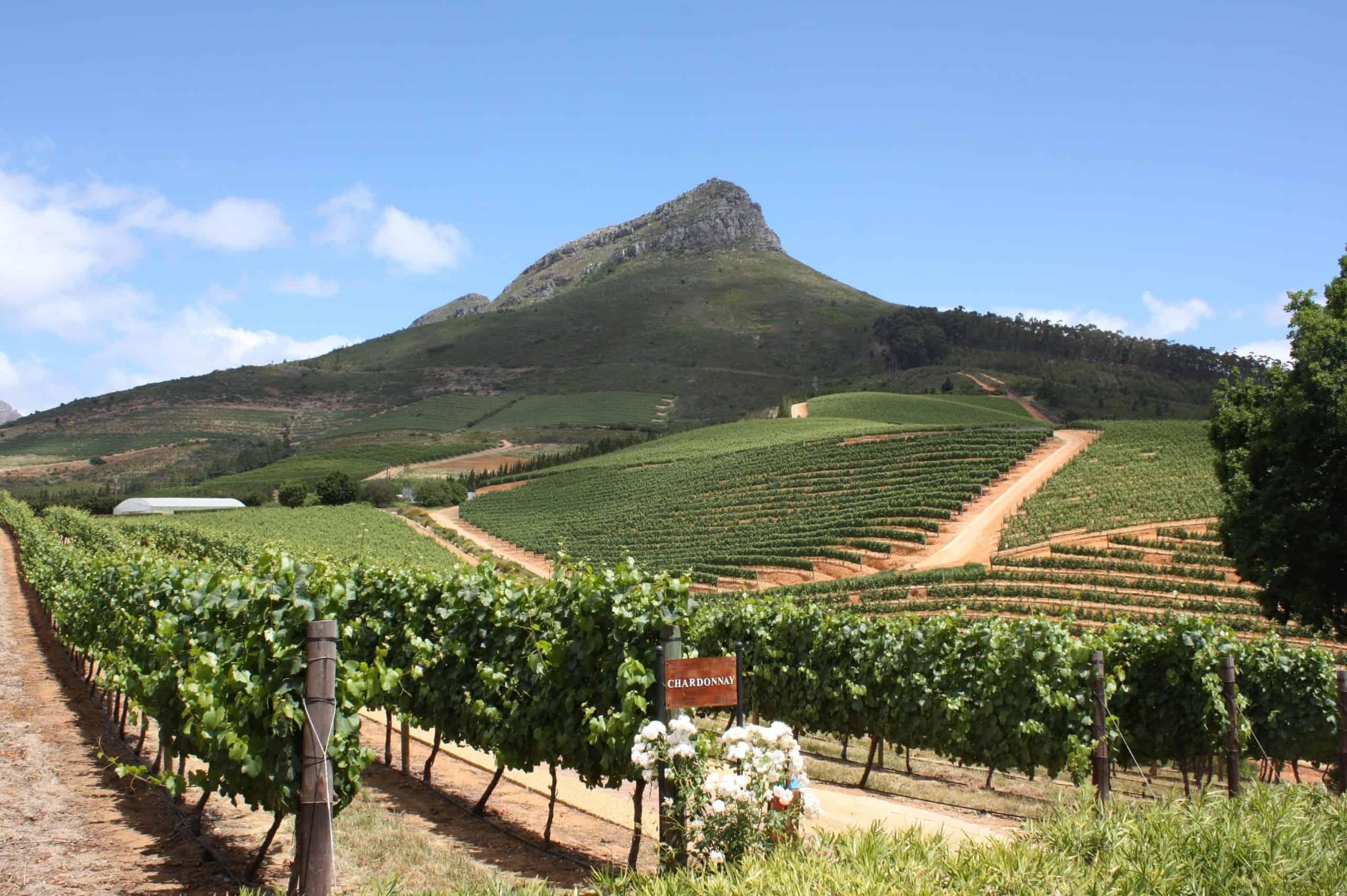 No Booze, No Problem: Sa Wine Farms Won't Let You Down Over Weekends photo