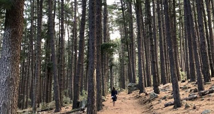 For Picnics + Dog-friendly Hikes: Newlands Forest Is The Perfect Day Outing photo