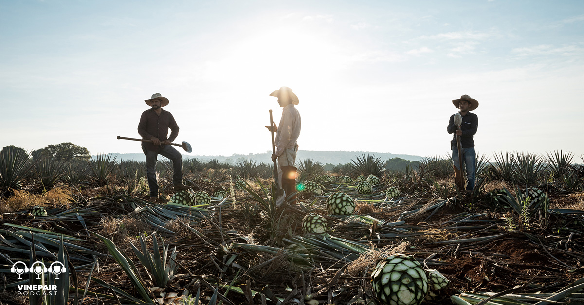 Vinepair Podcast: The Magic Of Single-field Tequila photo