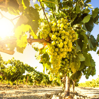 Here Are The 10 Best Chardonnays Of 2020 photo