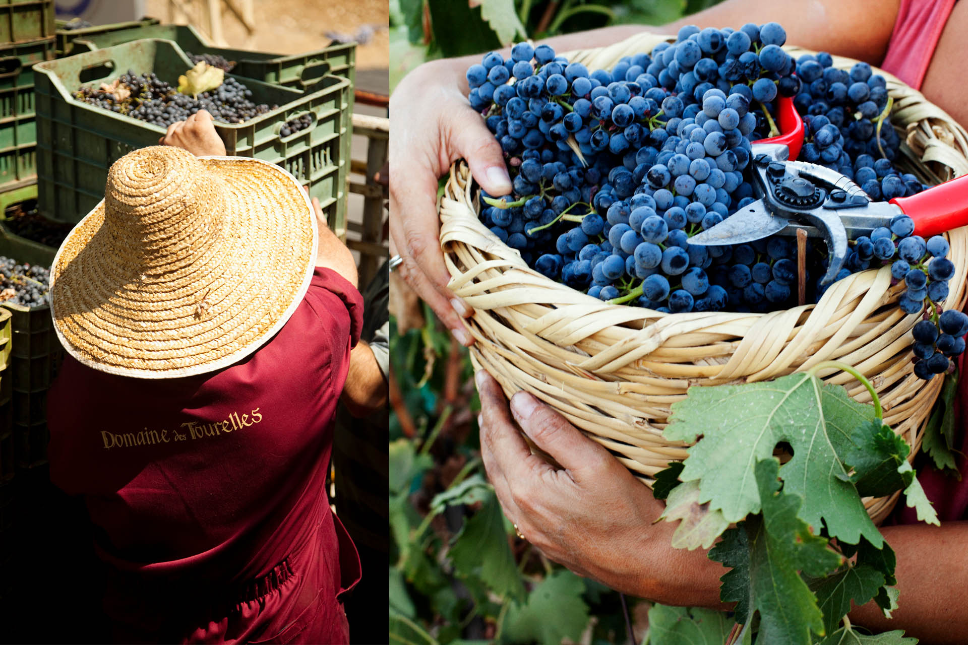 A Crucial Moment In Lebanon's 7,000-year Wine History photo