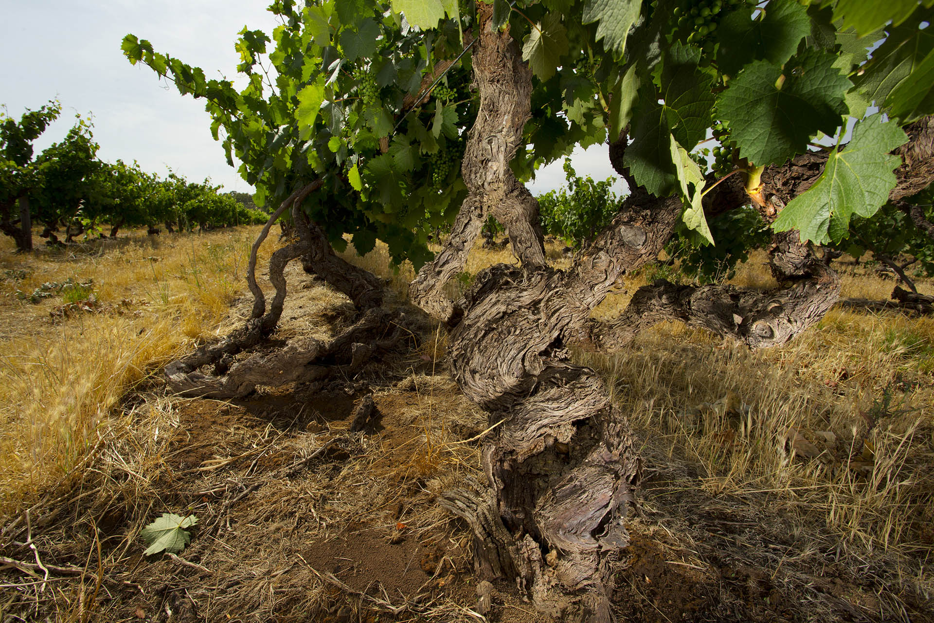 10 Vineyards Behind The World's Most Famous Wines photo