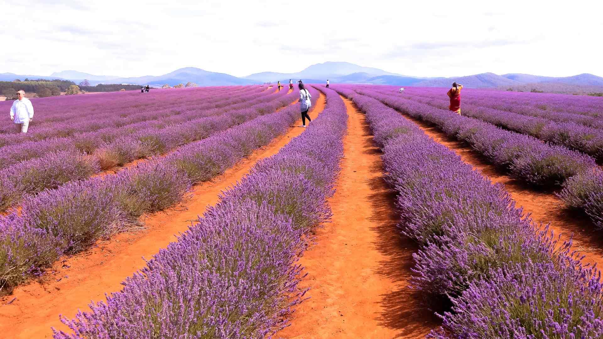 Eight Stunning And Unusual Places In Australia That Will Transport You To Europe photo