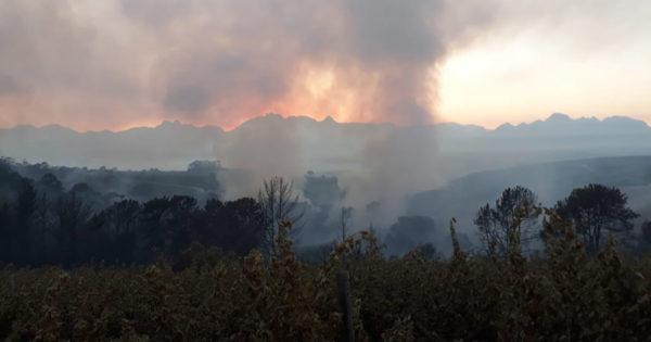Update: 3 Hectares Of Vines Damaged In Wine Farm Blaze photo
