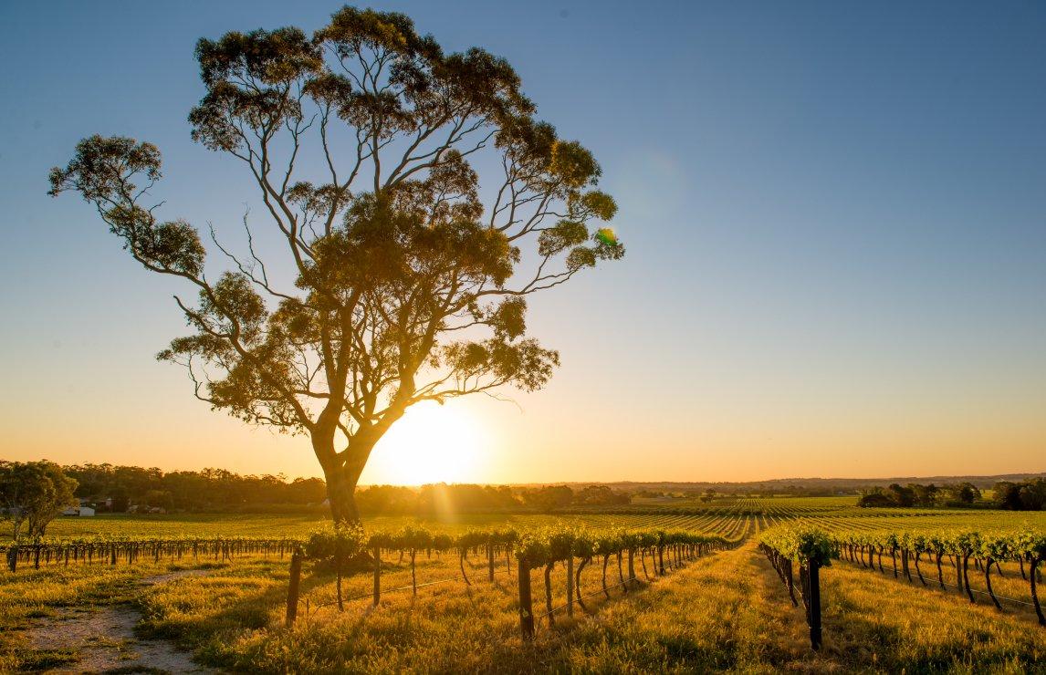 Australia's Best Red Wines: Shiraz, Cabernet Sauvignon And Grenache photo