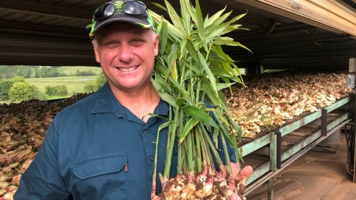 Pandemic The Root Cause As Ginger Prices Top $70/kg In Some Supermarkets photo