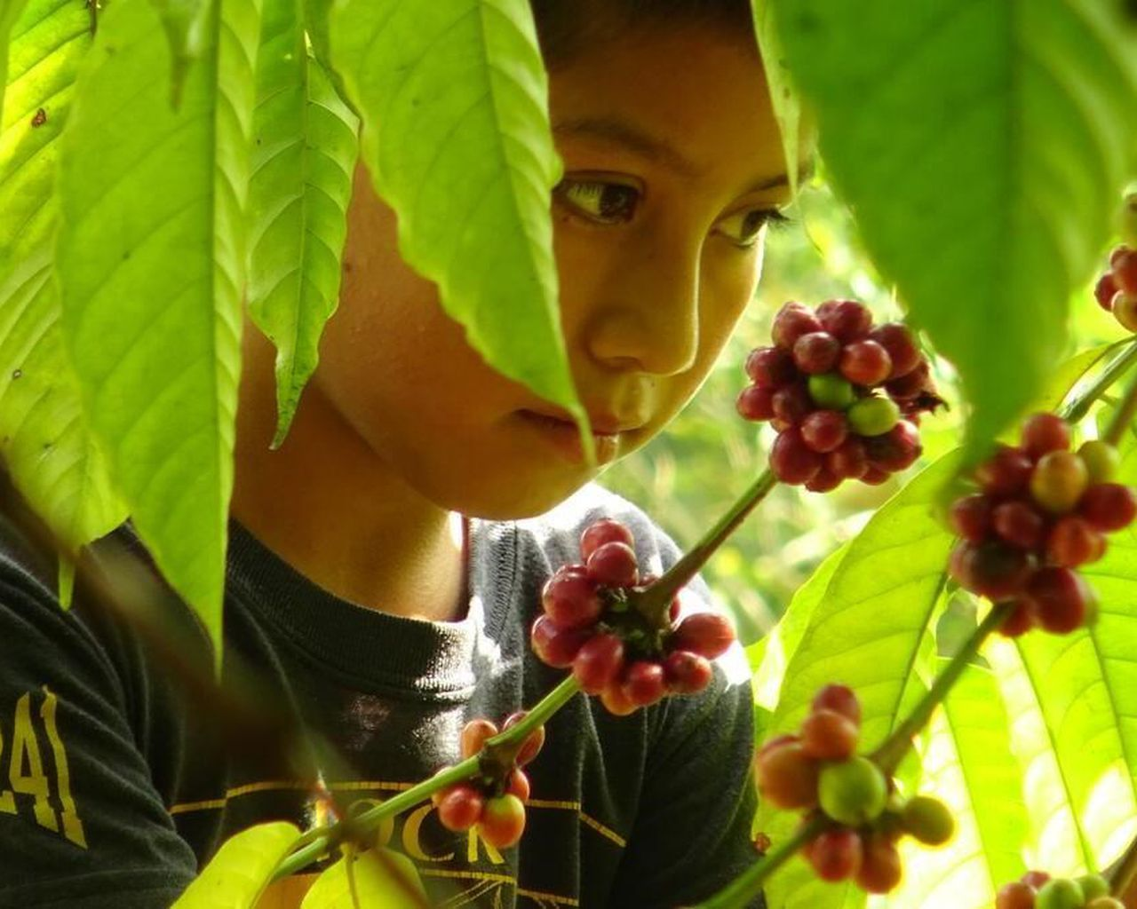 Child Labour Behind Every Canadian's Grocery Haul, And It May Get Worse: World Vision photo