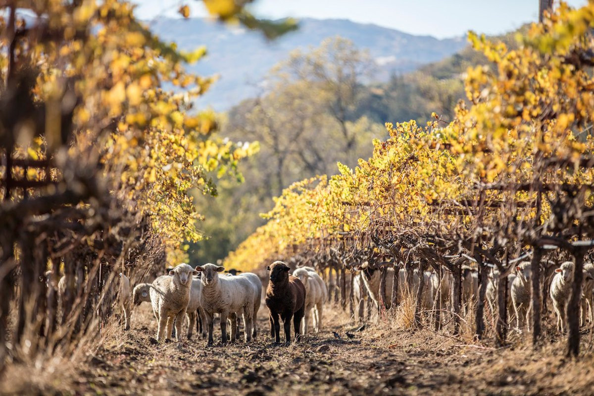 What Role Can Vineyards Play In Conserving California's Biodiversity? photo