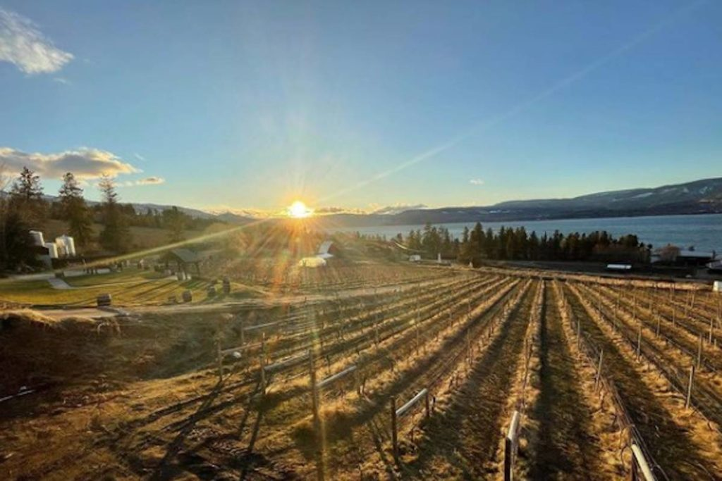 Educational Culinary Facility Proposed For Summerhill Winery photo