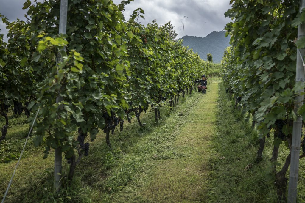 Africa's Miners And Winemakers Toast China's Row With Australia photo