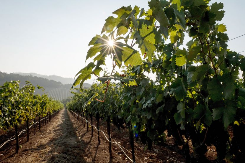 Carrie's Corner: Mitigating The Effects Of Covid-19 In The Wine Industry photo