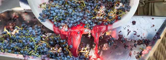 California's Wine Grape Crush Report photo