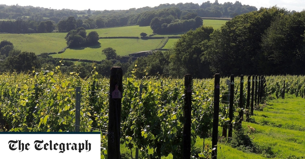 The Landmark Moment That Proves British Wine Makers Are Taking On Champagne photo
