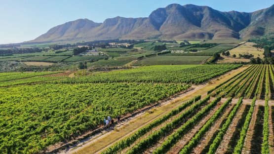 You Can Buy 1% Of A Wine Farm For R1 Million photo