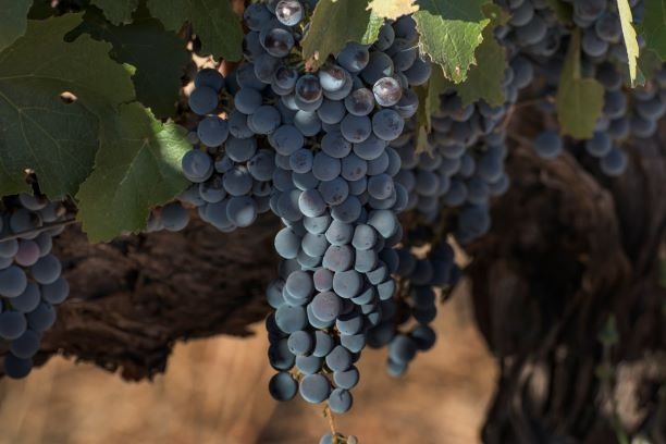 Covid-19 Leads To Surge In International Demand For Organic Wine And Food photo