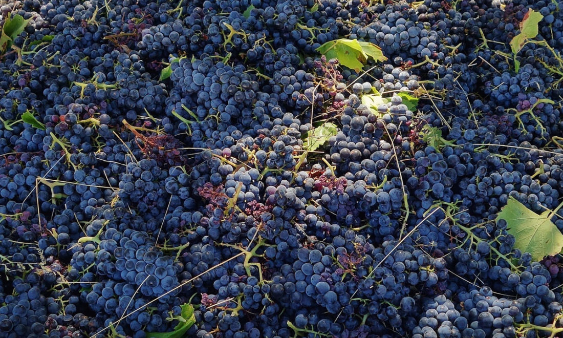 Wine Exports Down As China Tariffs Hit Home photo