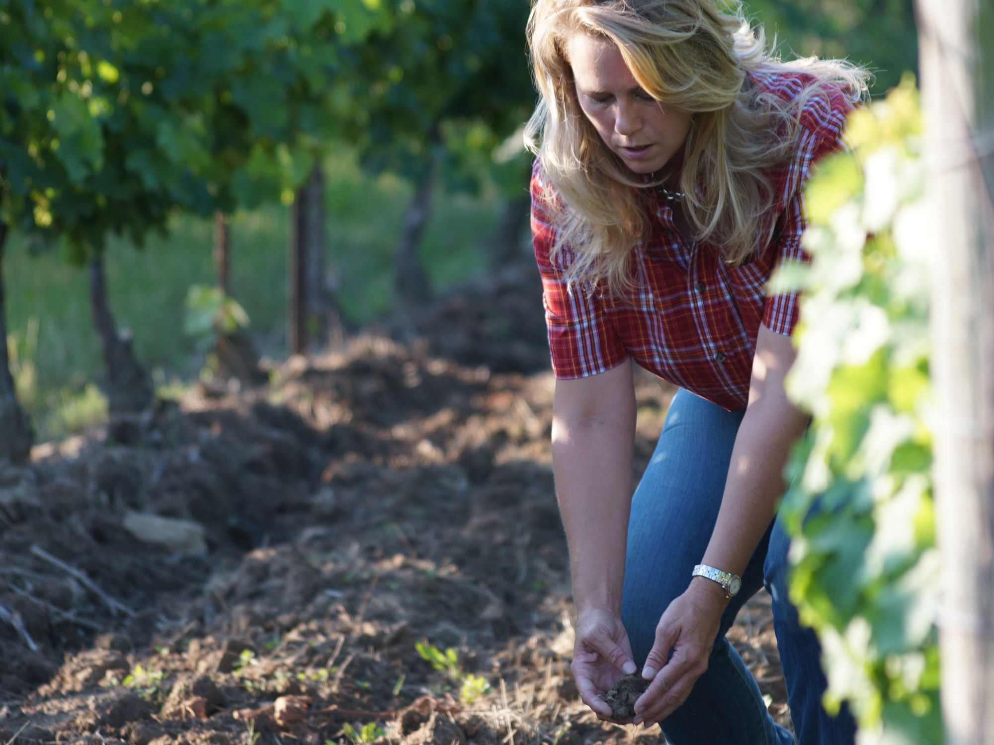 On The Vine: Perfect Pairings photo