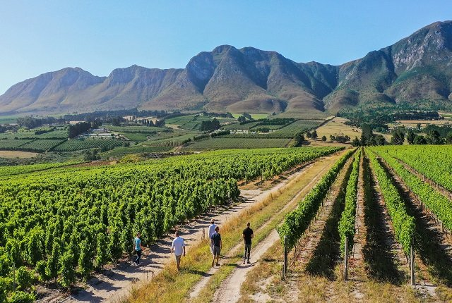 You Can Now Invest In Part Of A Luxury Wine Farm In South Africa – How The Model Works photo