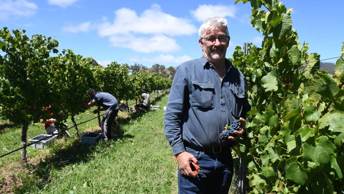 Wineries Look At Picking Options Amid Shortage Of Backpackers photo