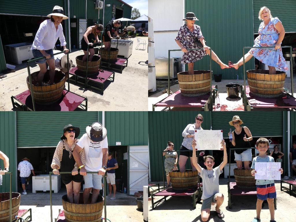 Grape Fun: Kingsley Grove Hosts Biggest Wine Stomp To Date photo