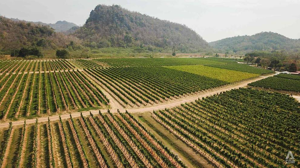 Adapting To Climate Change: How Thailand's Tropical Wines Are Teaching The Old World New Tricks photo