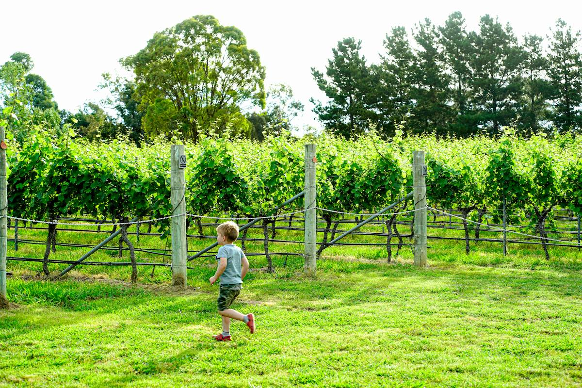 Canberra Wine Makes A Comeback For 2021 photo
