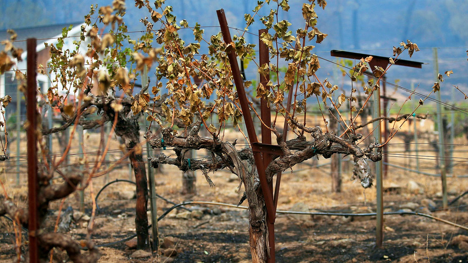 How Did 2020's Wildfires Impact California Wine? photo