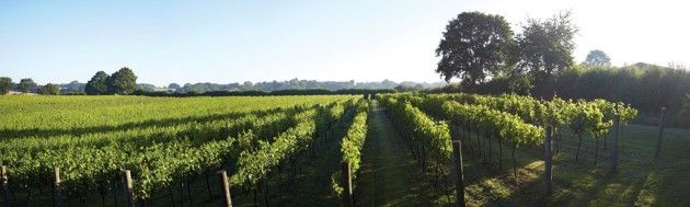 Kent Picked As One Of 10 Top 'grape Escape Destinations' photo