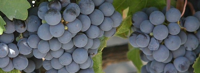 Malbec: Southern Oregon's Rising Star photo