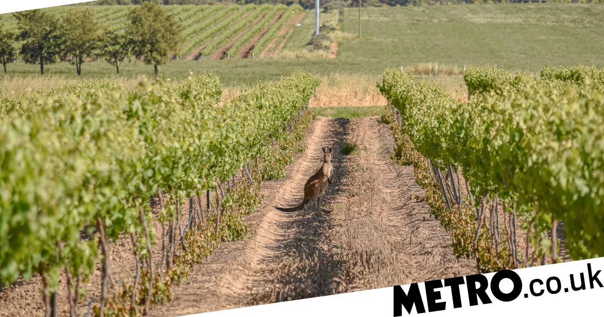 Why Wine Lovers Should Plan A Cycling Trip Along The Clare Valley Riesling Trail photo