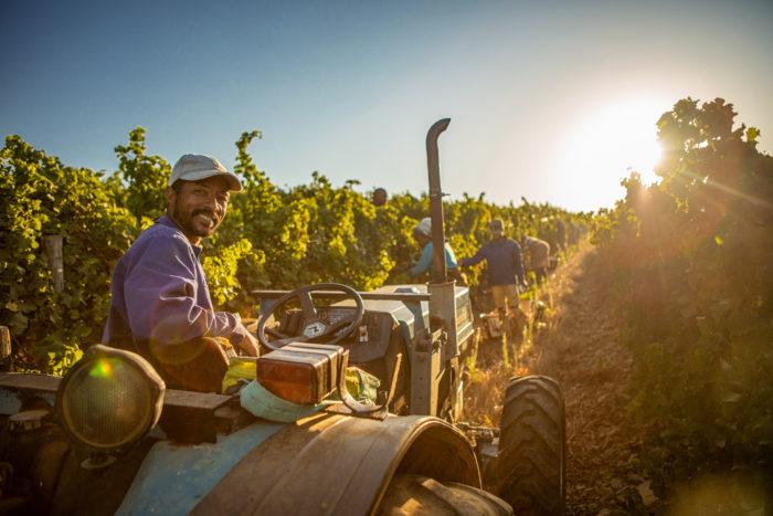 Celebrate The Grape With Personalised Harvest Tours! photo
