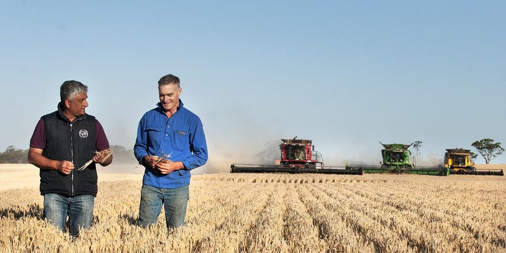 Asahi Sources Australian Barley photo