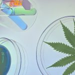 How To Pass A Marijuana Drug Test In Modern Times photo