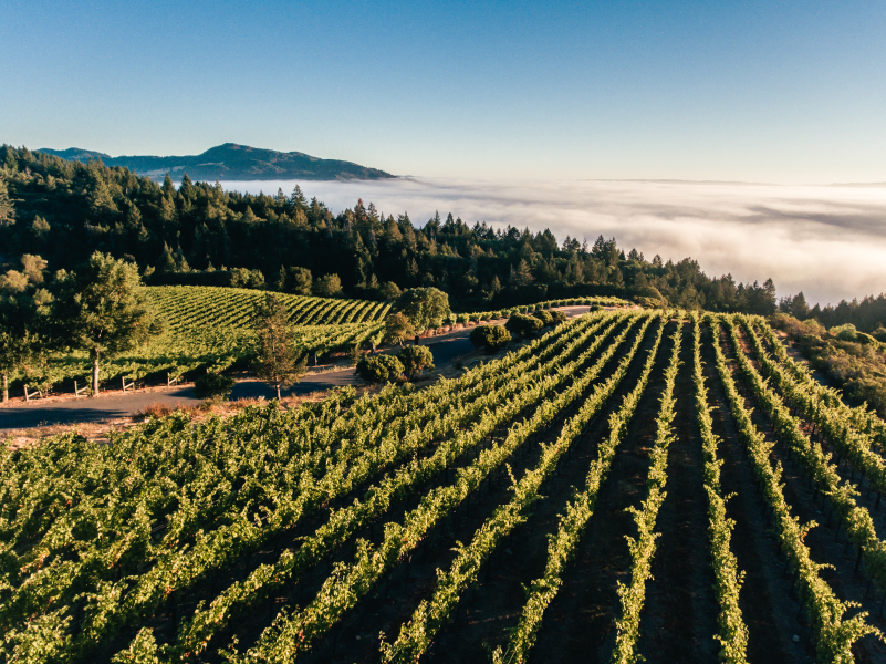 Wines From Napa Valley's Mountains photo